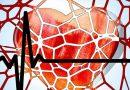 Bepaal de maximale hartslag